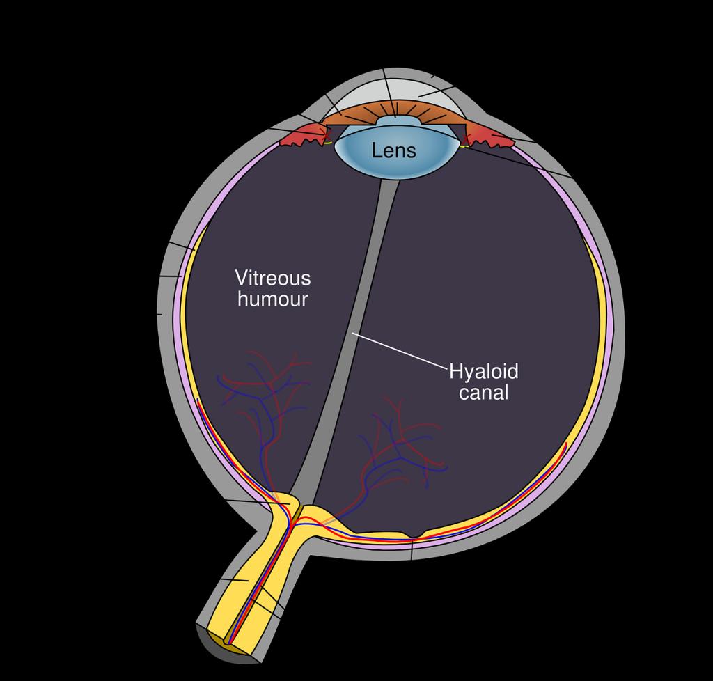 Cornea e Retina
